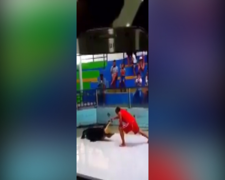 The trainer puts his hand into the croc's mouth