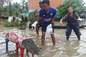 Residents strip a crocodile of its meat after it escaped from a flooded zoo