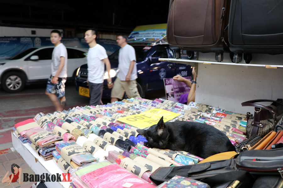 A cat takes a nap as tourists walk by on Beach Road at night