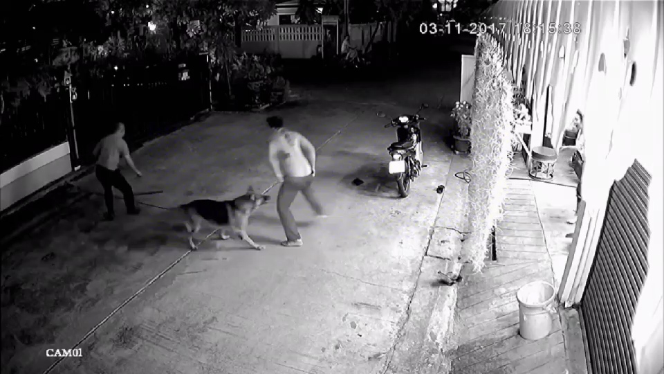 LOYAL PET DOG HELPS OWNER AS HE'S BRUTALLY ATTACKED IN THE STREET (ViralPress).00_00_13_12.Still002