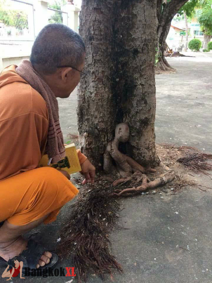 SPOOKY TREE ROOTS TAKE HUMAN FORM OF GHOST OF FORMER MONK