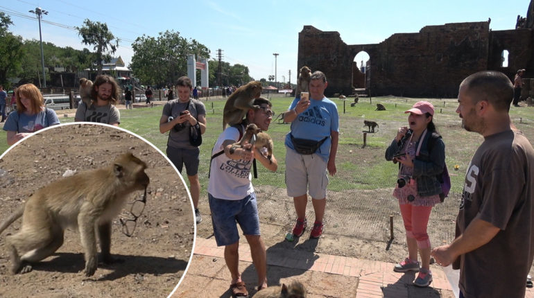 HILARIOUS MOMENT MONKEY STEALS LAD'S GLASSES BEFORE FURIOUS FATH